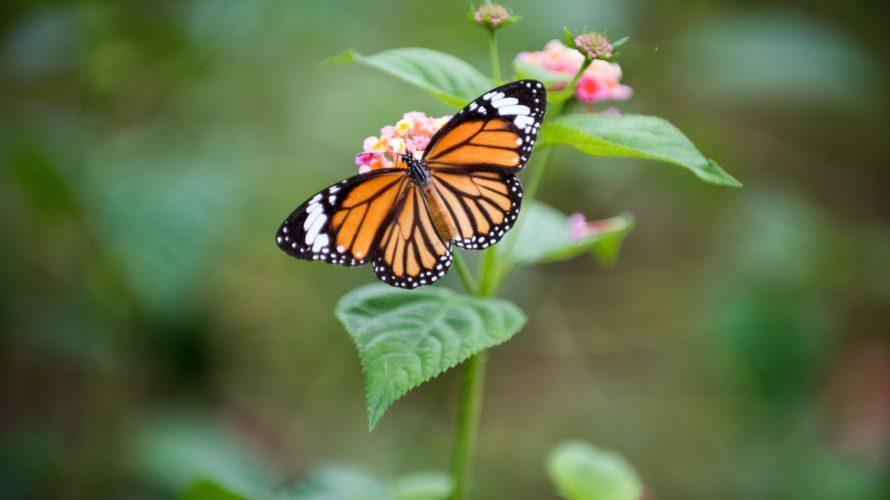 英会話を楽しくするイディオム~have butterflies in my stomach ~